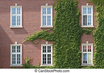 Windows entwined with wild grapes in the Wawel castle....
