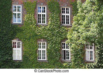 House in grapes at Krakow near Wawel Castle closeup