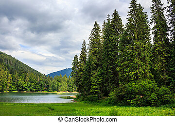 coniferous lake shore in mountains - coniferous forest on...