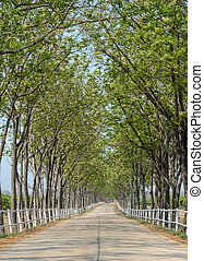 Tree lined road to farm