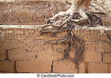 Tree roots - Roots of a tree