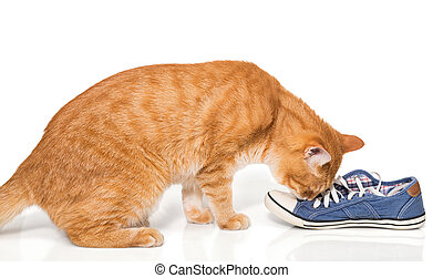 Red cat sniffing shoes - The red cat sniffing shoes,...