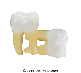 tooth isolated on a white background