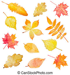 Set of autumn leaves isolated on white background. Hand...