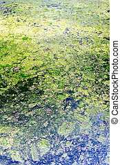 polluted waters with green and yellow dirty scum - polluted...