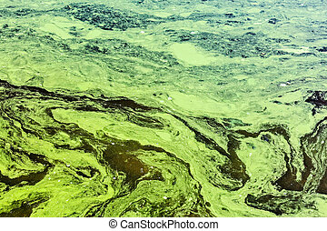 polluted waters by toxic chemicals with green and yellow...