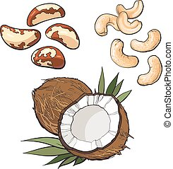 Collection of cashew, coconut and brazil nuts vector...