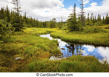 Wild forest and creek in the high moutains of Norway -...