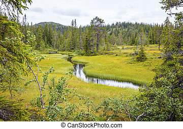 Wild and untouched forest in the high moutains of Norway -...