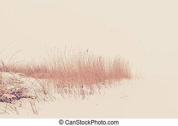 Reed in the snow in the winter