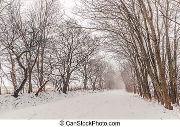 Nature path covered with snow in the winter