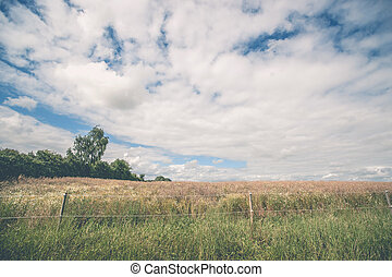 Fence on a meadow