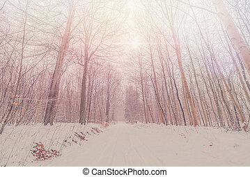 Tall trees in a snowy forest