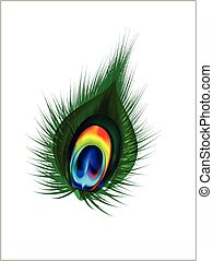 Vector Peacock Feather.eps