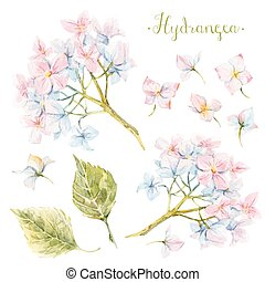 Watercolor hydrangea set - Beautiful set with some...
