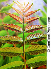 Symmetric Leaves - Closeup on wild plant with symmetric...