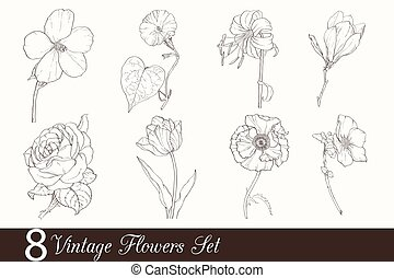 Vector Set of 8 Vintage Drawing Flowers With Tulip, Poppy,...