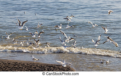 Many seagulls is catching fish on shore of a sea