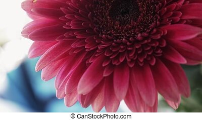 View of red gerberas in flowerbed. Flowers. Blossom