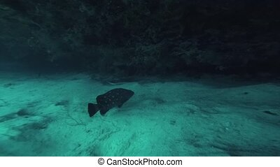 Spotted fish at coral reef underwater. Cramp fish. Beautiful...