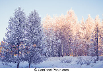 Winter morning forest