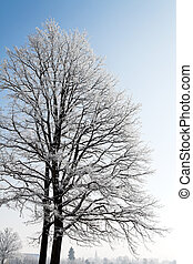 Landscape with hoarfrost, frost and snow on tree in winter.