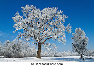 Landscape with hoarfrost, frost and snow on tree in winter....