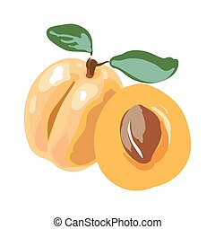 Fresh cut apricot fruits isolated on white background Vector...