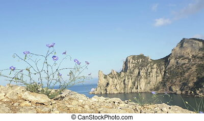 Common flax or linseed against the background of mount...