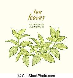 green tea leaves - Illustration with green tea leaves on...