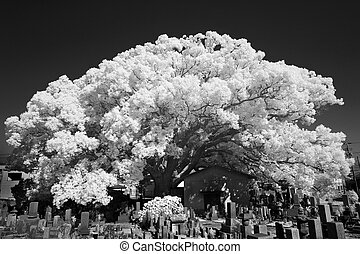 infrared photography, monochrome - infrared photography,...