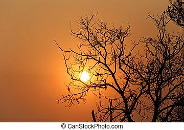 träd, kväll, silhuett, solnedgång