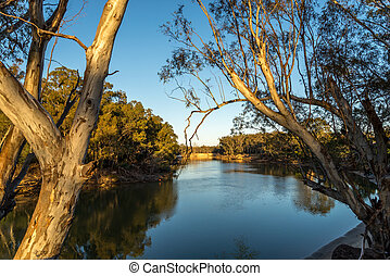 Murray River early morning - Murray river early in the...