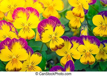 Beautiful Little yellow flowers .