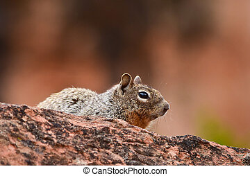 Ground squirrel in the wilds,Colorado,USA