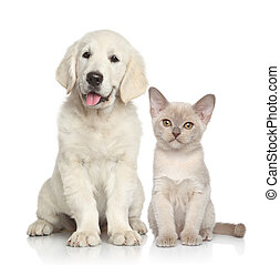 hund, tillsammans, katt
