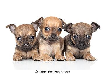 かわいい, おもちゃ, 背景, 子犬, 白, テリア