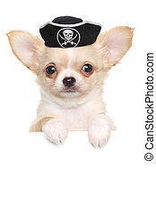 Chihuahua puppy in carnival pirate hat above white banner...