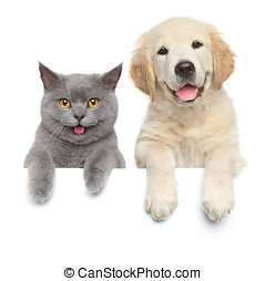 Cat and dog over white banner - Happy cat and dog show paws...