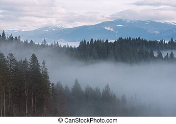Mountain landscape with fir forest and fog - Mountain...