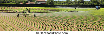 automatic irrigation system of a lettuce field