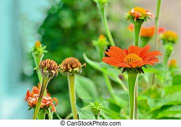 Dried and fresh flower in garden