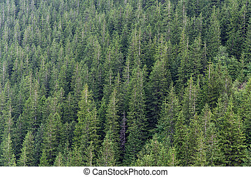 Fir forest, green background of a variety of trees