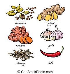 Sketch style spices - garlic, ginger, turmeric, cardamom,...