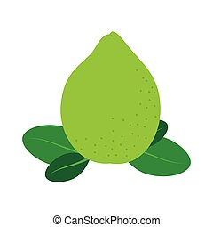 Delicious and fresh lemon fruit, vector illustration.
