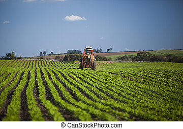 Machine working at peanut field under a blue sky....