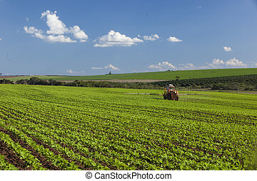 Machine working at peanut field under a blue sky Agriculture...