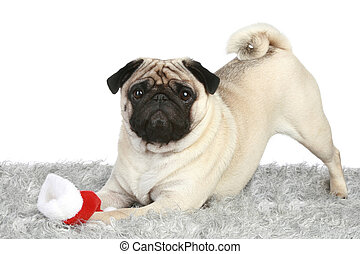 Pug puppy with Santa christmas hat
