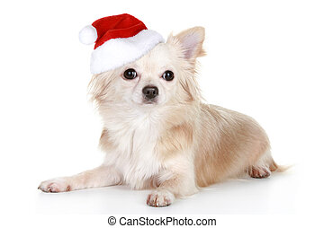 Long-haired chihuahua puppy in christmas cap on a white...