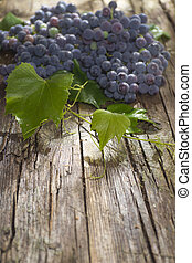 Black grape strawberry - Late summer fruits, collection of...